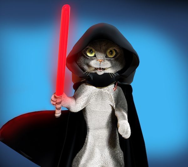 jedi cat reading to be recruited